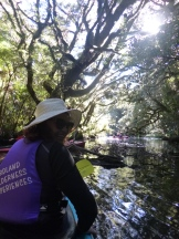 At the beginning of our kayak trip in Milford Sound our guide took us into some narrow estuaries enclosed by dense vegetation