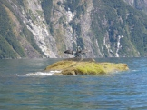 Cormorant spreading its wings on the rocks before our lunch on our kayak trip to Milford Sound