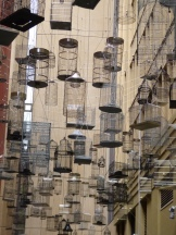 Empty cages symbolize the displacement of native flora and fauna, in this case native birds, in urban centers